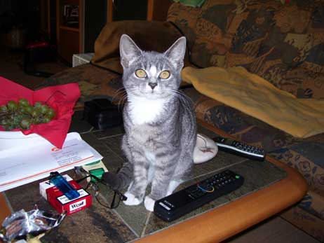Grau Getigerte Katze Die Grau Getigerte Katze Wurde