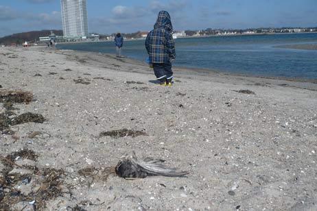 53 verendete Vögel hat Urluaber Matthias Mengel am Priwall-Strand gezählt. Foto: <b>MM</b>